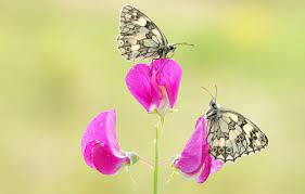 Wallpaper macro, butterfly, flowers ...