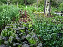 Herb Garden Herb Garden Brooklyn Botanic Garden
