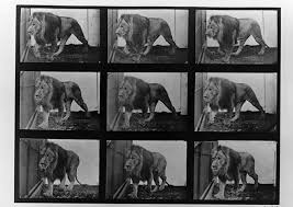 This excellent animal themed game, animals sequence, is going to help you as it will allow you to practice your intellectual facilities and concentration. Eadweard Muybridge Collections Muybridge Image Context