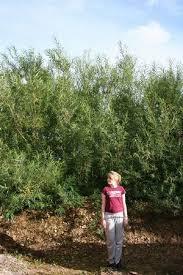 16 Fruit Trees For Zone 3 With Great Tasting Fruit  Joybilee FarmHybrid Fruit Trees For Sale