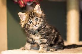 Getting Started With A <b>New Kitten</b> — Tailchaser Rescue