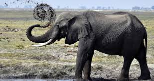 Wallpaper Elephant Photos Hd