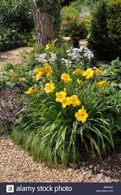 Daylily Designs Day Lily Hemerocallis In A Perennial Garden Design