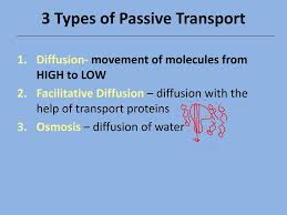 3 Types Of Passive Transport Passive Active Transport Ppt Download
