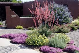 drought resistant garden. Delighful Drought 5 DroughtTolerant Landscaping Ideas For A Modern LowWater Garden   Freshomecom And Drought Resistant G