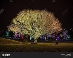 Draper Lights Tree Of Life Tree Life Draper Image Photo Free Trial Bigstock