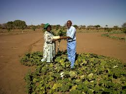 Colleges Of Agriculture Agriculture In Zimbabwe Wikipedia