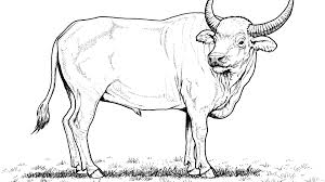 Baby Buffalo Coloring Pages Ny Cape Water Colouring Draw Fearsome