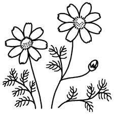 コスモス1コスモスキキョウ桔梗秋の花無料白黒イラスト素材