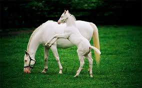baby white horse.  Baby 4 Throughout Baby White Horse O