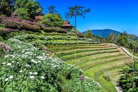 free images forest sunrise huai traveler pattern tourism holiday huenamdang summer beautiful mountain view mai top grass design thailand