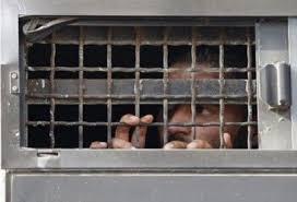 Image result for اعتصاب اسرای فلسطینی وارد روز بیست و پنجم شد