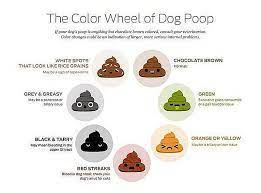 what your dog s color means