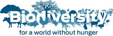 essay on biodiversity conservation speech on importance of biodiversity conservation