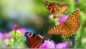 Beautiful Butterfly Images Hd Free Download