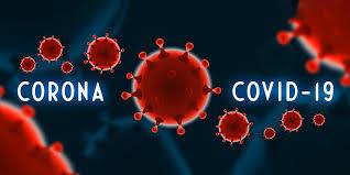 Koronavírus okozta megbetegedések háziállatokban - Bonafarm