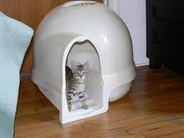 image covered cat litter. Booda Dome Covered Cat Litter Box Image