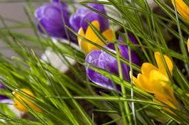 E Spring Quote Garden