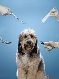 The High-Cost, High-Risk World of Modern Pet Care - Bloomberg