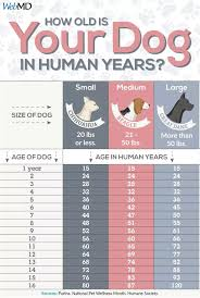 Dog Age In Human Years Chart Dog Years How To Calculate Your Dogs Age Dog Age