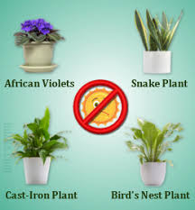 1000 images about binnehuis plante on pinterest indoor plants and terrarium best office plants no sunlight