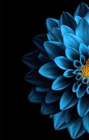 Dark Blue Flower Wallpaper Hd - Novocom.top