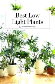 good house plants low good houseplants safe for cats