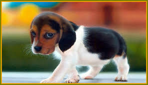 2464x1632 baby puppy widescreen with puppies wallpaper full hd for cute dogs of mobile phones pics desktop