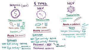 Overview Of Acute Viral Hepatitis Liver And Gallbladder