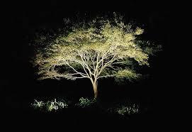 landscape lighting trees. Landscape Lighting Uplight Trees