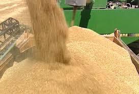 Сельское хозяйство Туркменистана в году Новости Туркменистана Наращивание объемов производства сельскохозяйственной продукции обеспечение в стране продовольственного изобилия и гарантия продовольственной безопасности