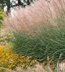 Garden Design Courses Gorgeous 48 Ways To Use Ornamental Grasses In Your Landscape Better Homes