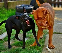 can rabies be cured in humans facts about rabies healthy live facts about rabies rabid dog cc by 2 0 by ben fruen