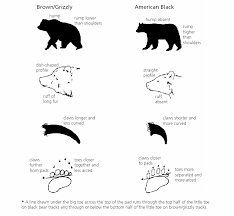 Bear Classification Chart Bear Identification U S National Park Service