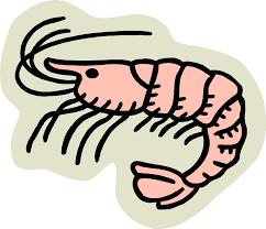 cooked shrimp clip art. Beautiful Clip For Cooked Shrimp Clip Art O