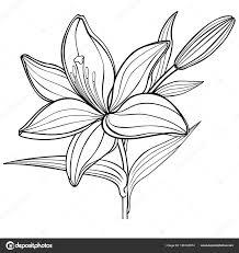 Illustrazione Giglio Disegno Colorato Fiore Giglio Con Germoglio