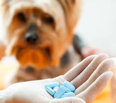 ibuprofen for pain relief in dogs