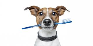 Image result for dog brushing teeth