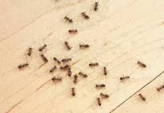Image result for Does vinegar attract ants?