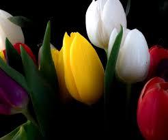 Free Wallpaper Download Hd High Resolution Flowers Black
