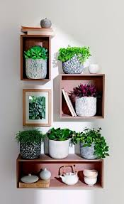 plants feng shui home layout plants. Feng Shui Plants For Harmony And Positive Energy In The Living Room Home Layout