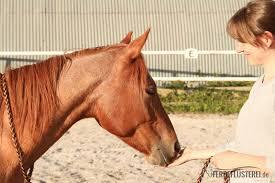 Funfaktor Pferd So Lernst Du Mit Deinem Pferd Spaß Zu Haben