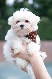 482 best Pets images on Pinterest