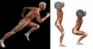 weights are better than cardio for fat loss