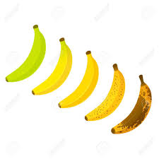 Banana Ripeness Chart Vector Illustration Set Of Different Color