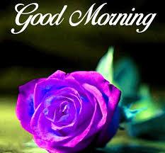 blue rose flower hd wallpap gd