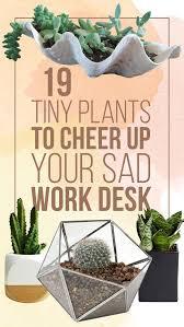 Office cubicle plants Tends 19tinyplantstocheerupyoursadworkdesk8096510865jpg Buzzfeed 19 Tiny Plants To Cheer Up Your Sad Work Desk