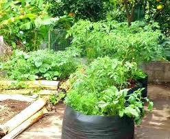 small vegetable garden ideas pictures australia uk for spaces decorating surprising