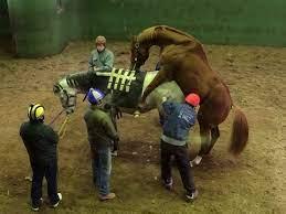 馬 の 交尾 競馬