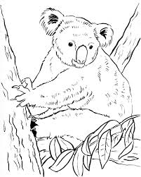 Small Picture Koala Bear Coloring Page Samantha Bell
